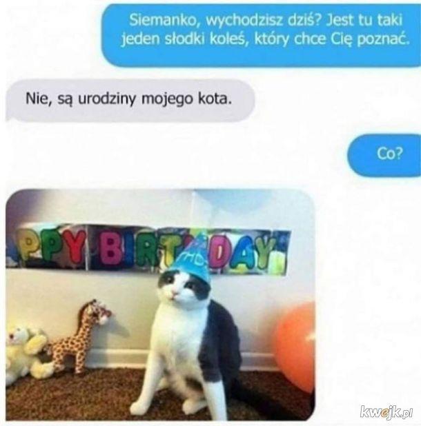 Sobota - urodziny kota