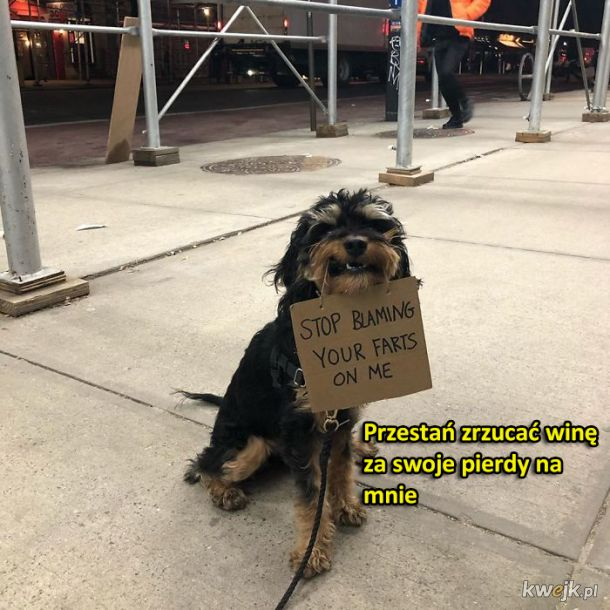 Pies protestuje w sprawie zwyczajnych rzeczy