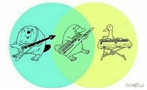 Wykres gatunkowy