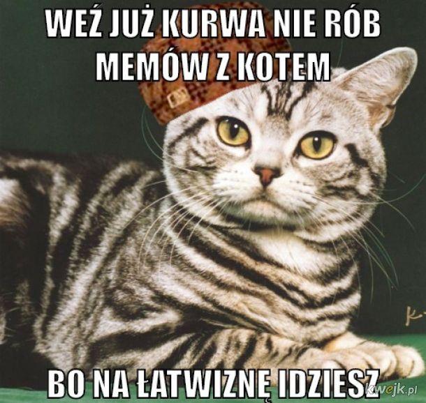 Za dużo kotełów