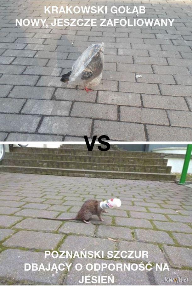 Kogo wybierzesz