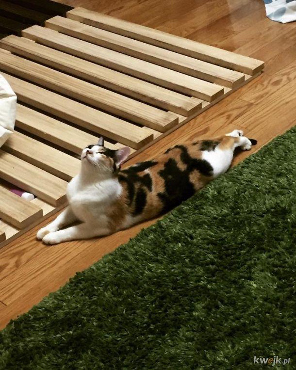 Bardzo długie koty, obrazek 8