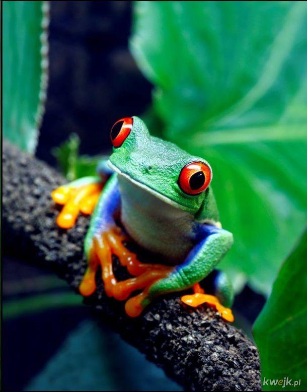 żaba na dzień żab #10