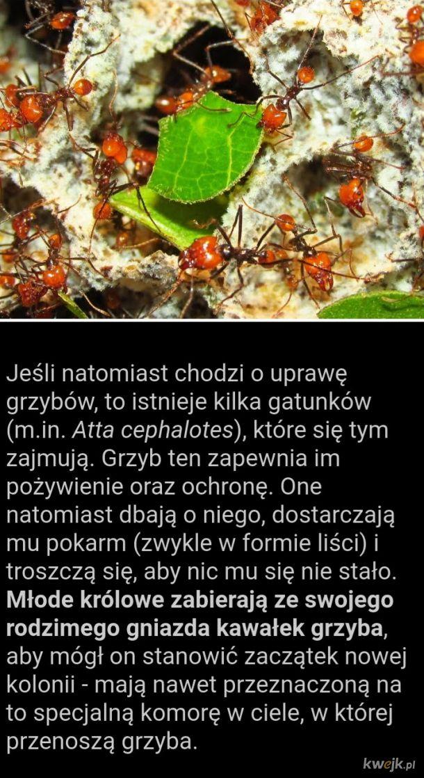 Ciekawostki o mrówkach, część druga