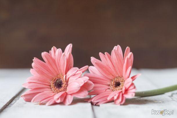 Ładne kwiatki dla Agatki (Agataas)