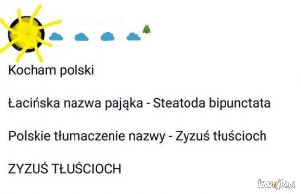 Polski język taki piękny