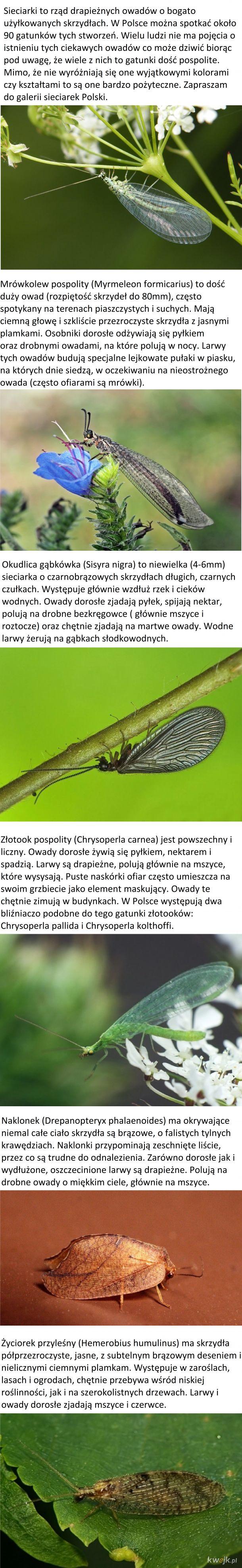 Sieciarki Polski