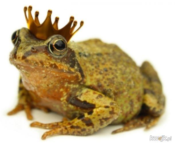 żaba na dzień żab #22 żaby dzisiaj