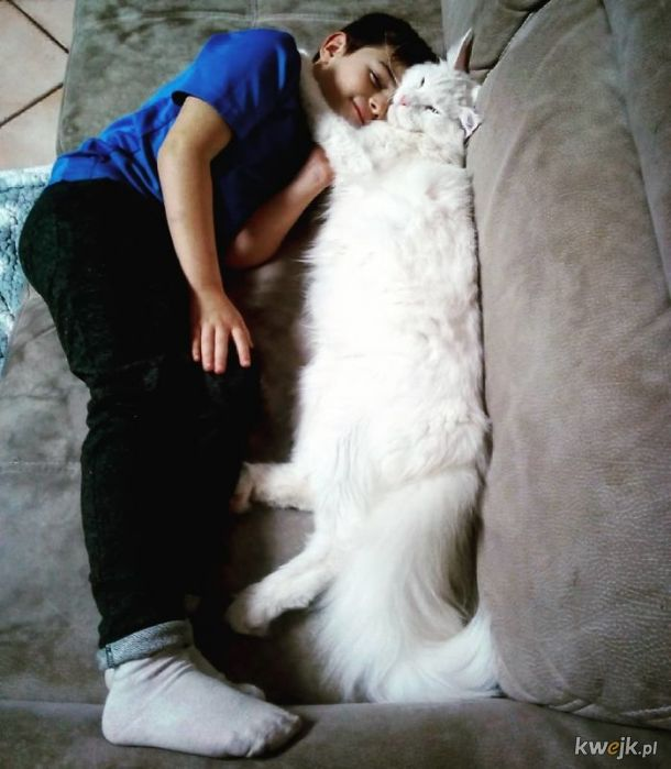 Bardzo długie koty, obrazek 19