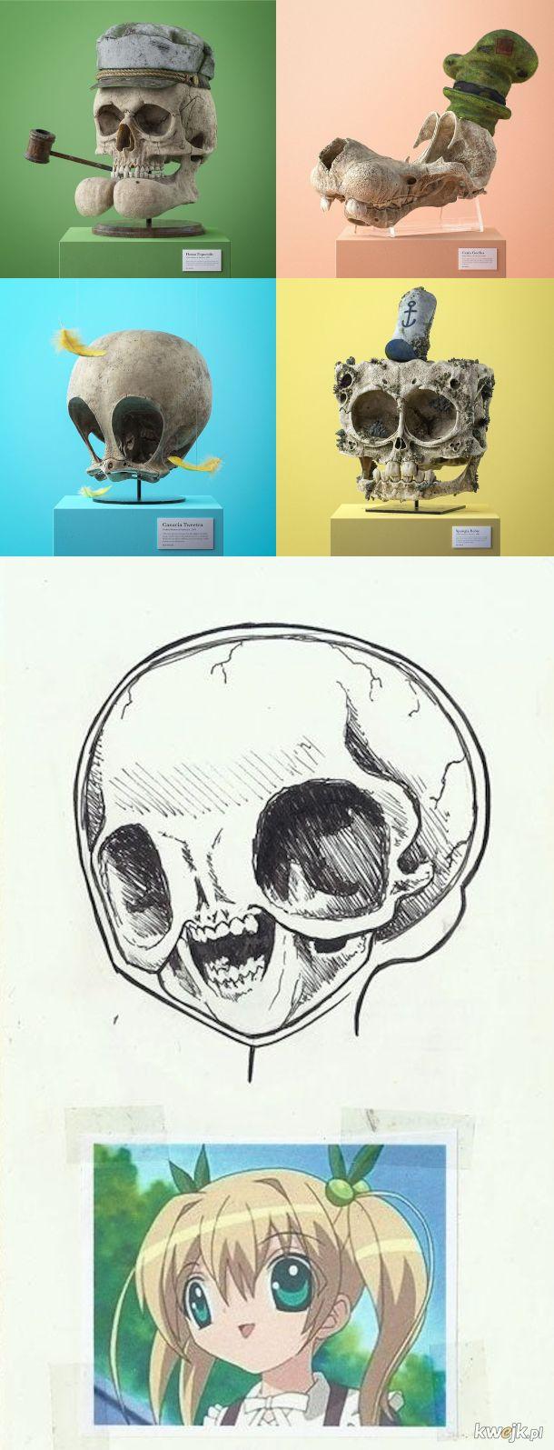 Nauka o czaszkach
