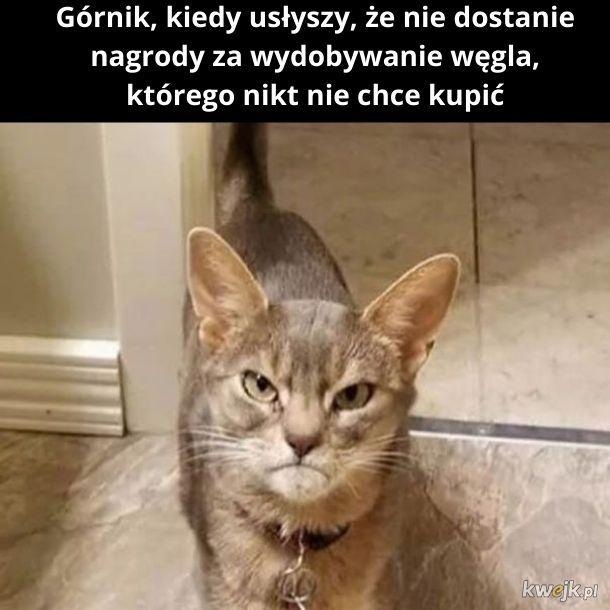 Kategoria: Zwierzęta. I nie dlatego, że kot...