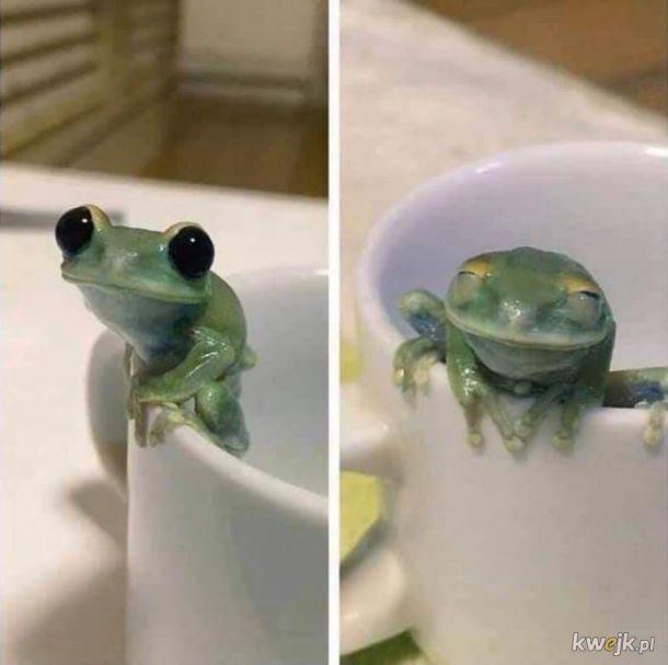 żaba na dzień żab #12  te słodziutkie oczka...