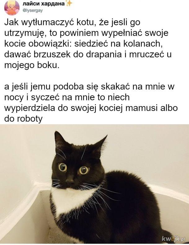 Koty nie wypełniają swoich obowiązków