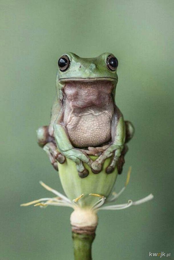 żaba na dzień żab #21