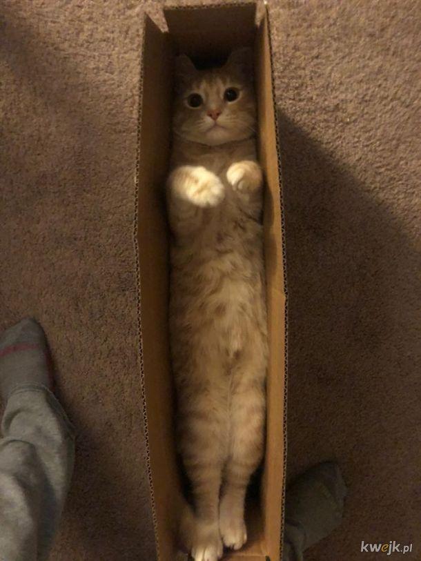 Bardzo długie koty, obrazek 11