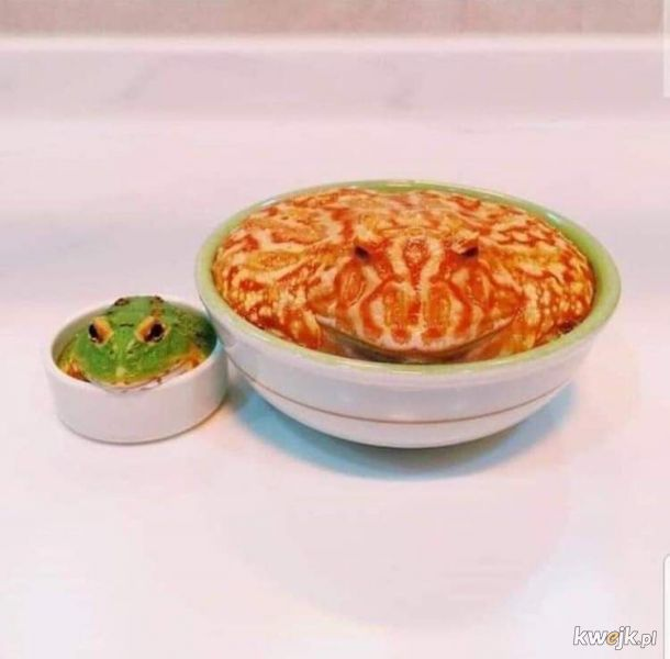 żaba na dzień żab #11