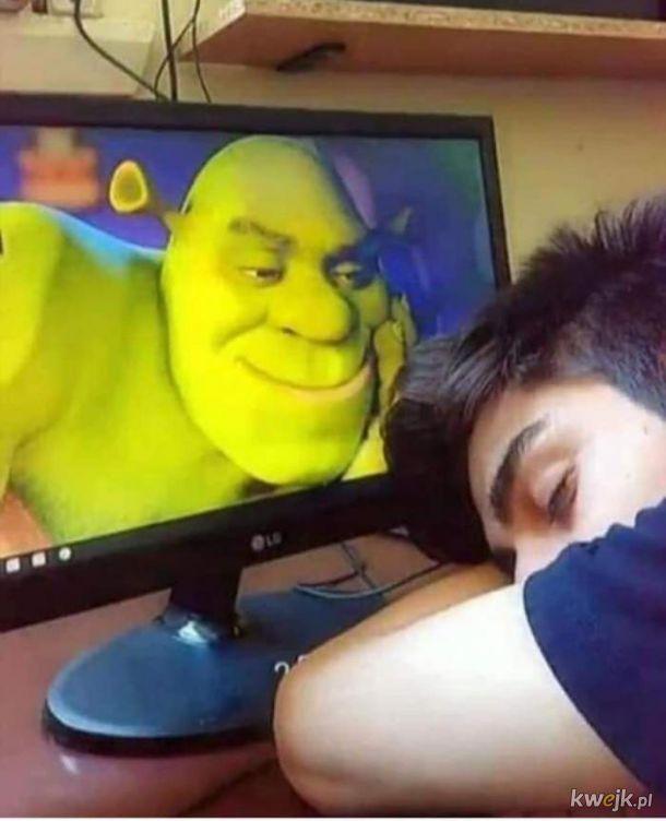Shrek Cię kocha