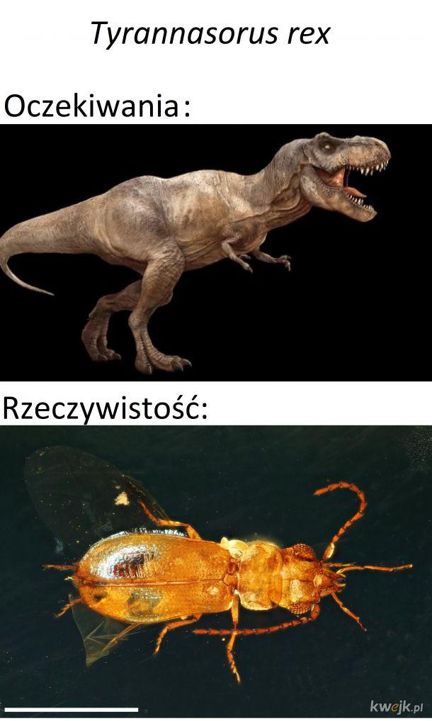 Tyrannasorus rex