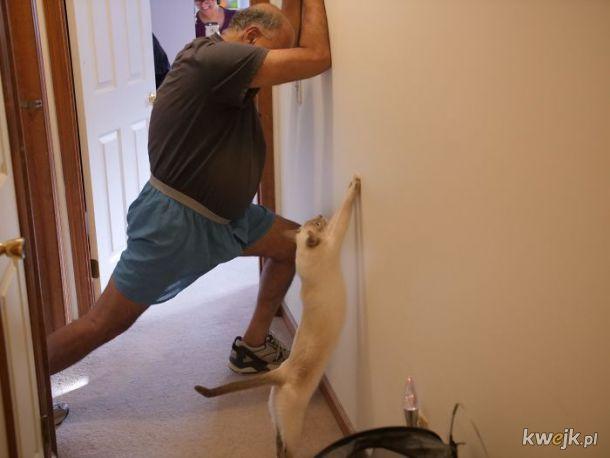 Bardzo długie koty, obrazek 2