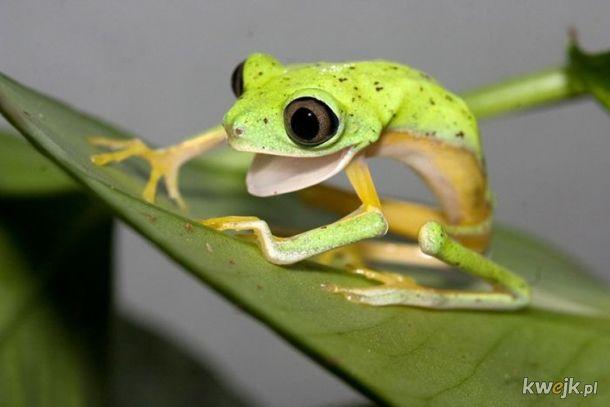 żaba na dzień żab #13