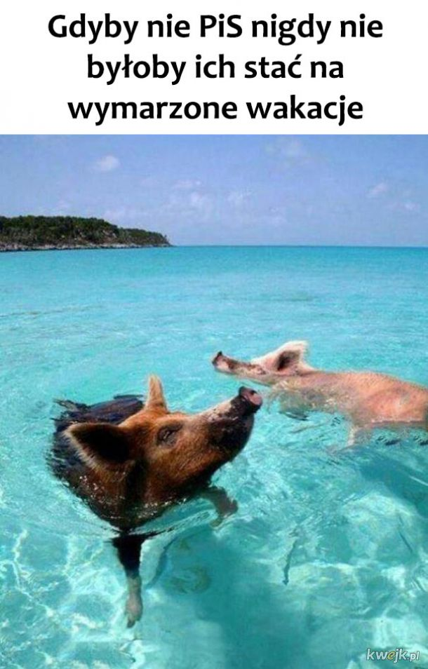 Świnie szczęśliwe