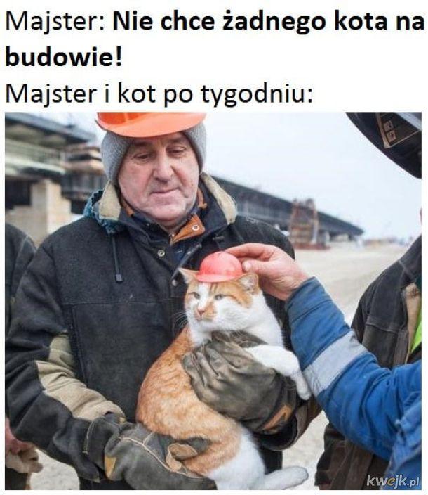 Majster i kot