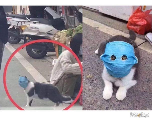 Kot-Azjata bezpieczny