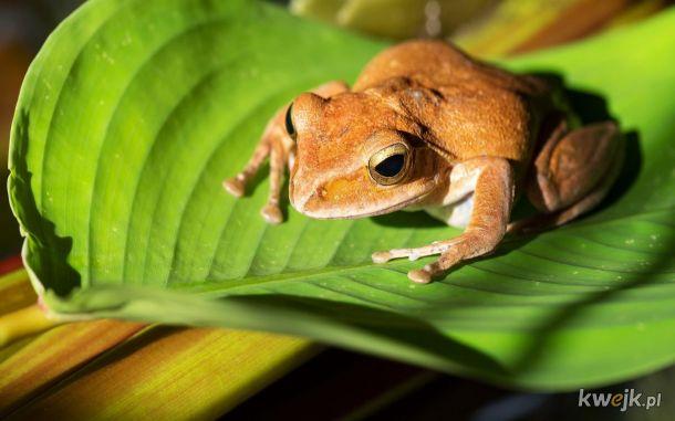 żaba na dzień żab #20
