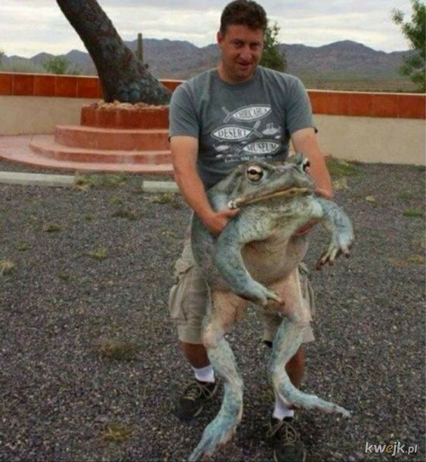 Duża żabka dla żabki w dzień żabek