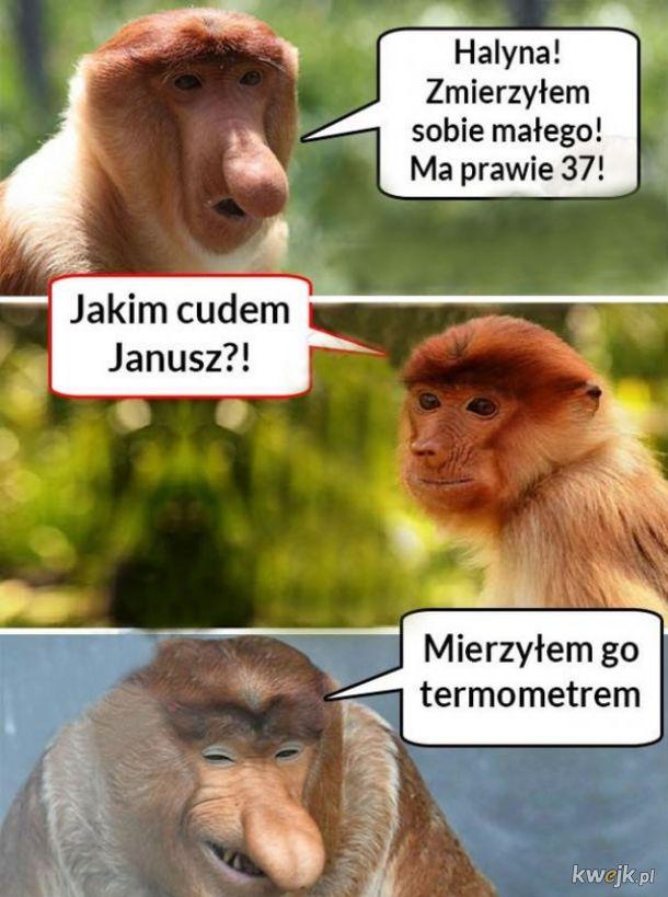 Miara Janusza
