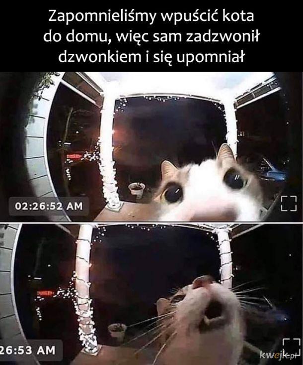 Mądry kotek
