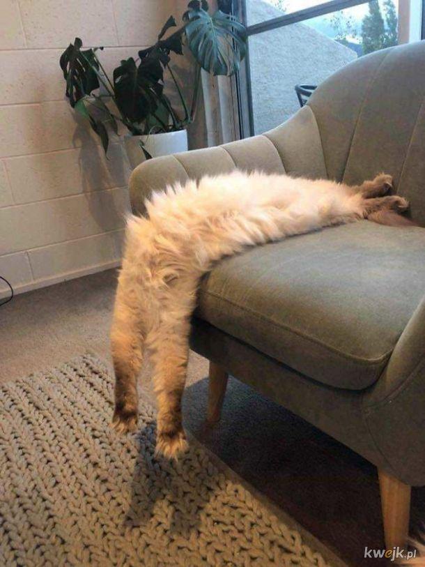 Bardzo długie koty, obrazek 13