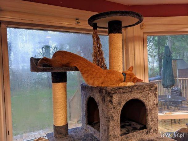 Bardzo długie koty, obrazek 14