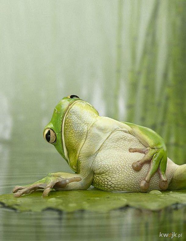 """żaba na dzień żab #7 """"namaluj mnie jak jedną ze swoich francuskich dziewczyn"""""""