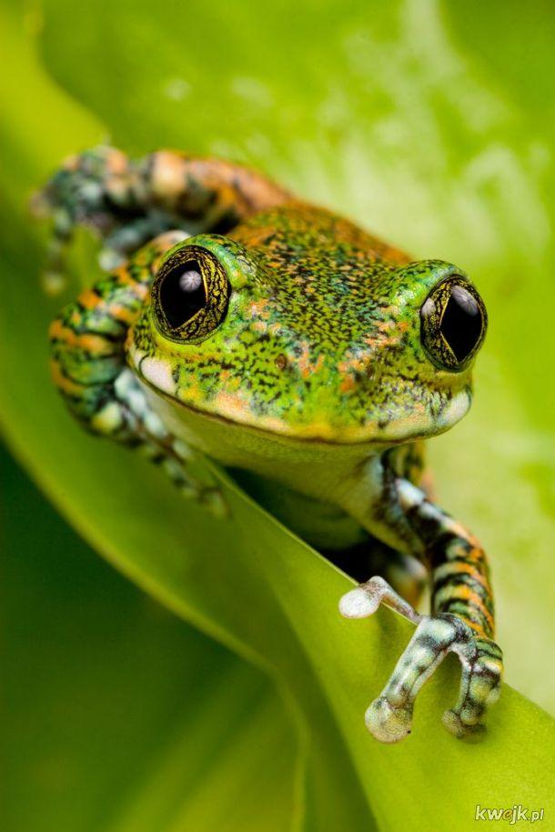 żaba na dzień żab #17