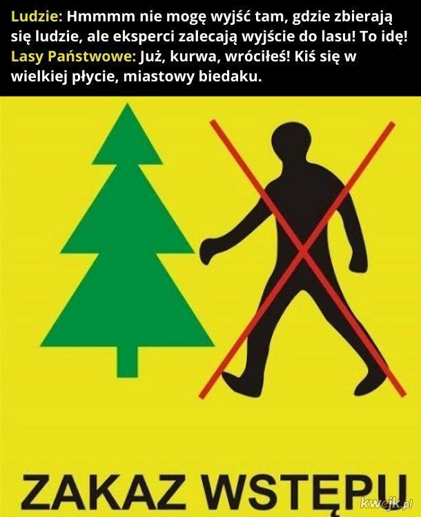 Lasy Państwowe zamykają lasy. Bo wycinka.