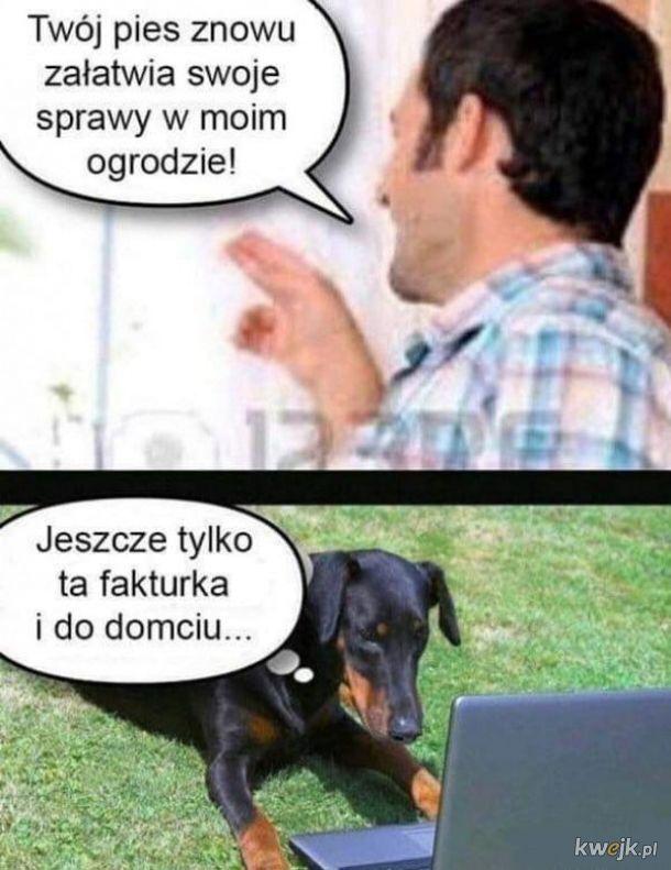 Psie sprawy