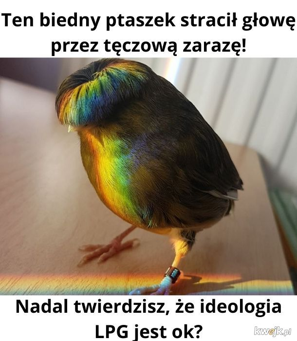 Ps. Ptaki nie istnieją. To drogi, przez które rząd nas obserwuje.