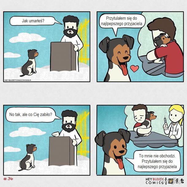 Oto komiksy zainspirowane przez psa, z którymi może się utożsamiać większość właścicieli psów, obrazek 16