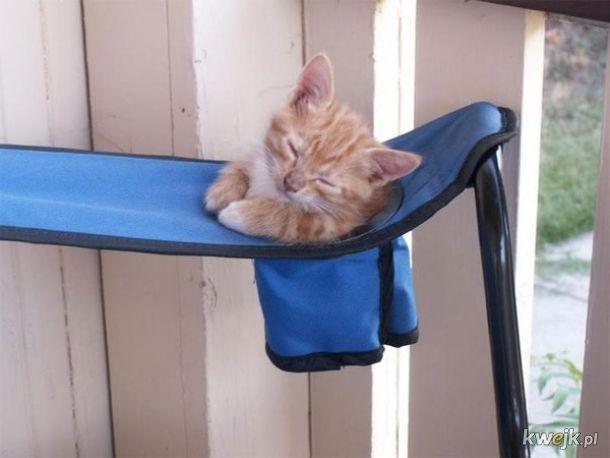 Dla kotów nie ma niewygodnych miejsc - potrafią strzelić sobie drzemkę praktycznie wszędzie