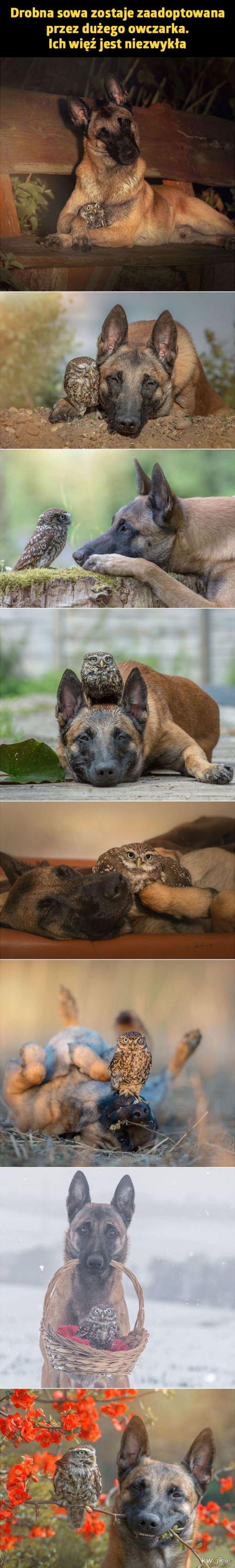 Niezwykła adopcja