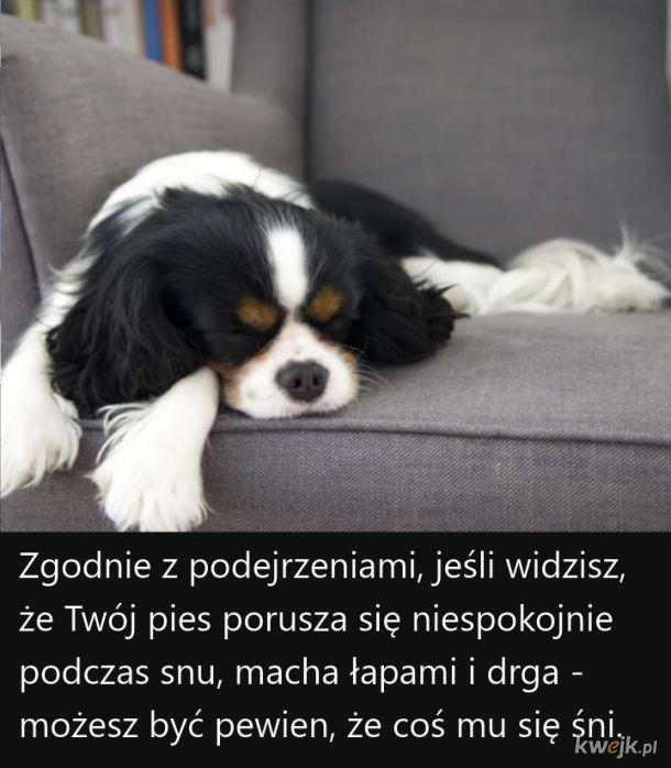 Ciekawostki o psach, część 2, obrazek 3