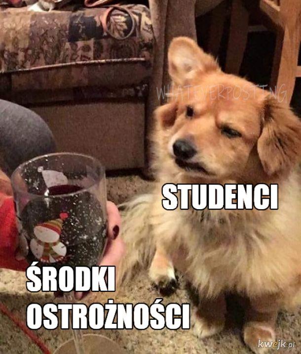 Zwierzaki studenciaki