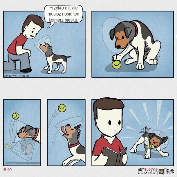 Oto komiksy zainspirowane przez psa, z którymi może się utożsamiać większość właścicieli psów, obrazek 3