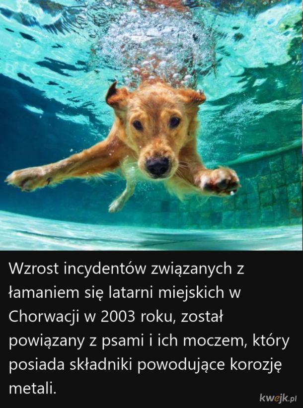 Ciekawostki o psach, część 2, obrazek 2