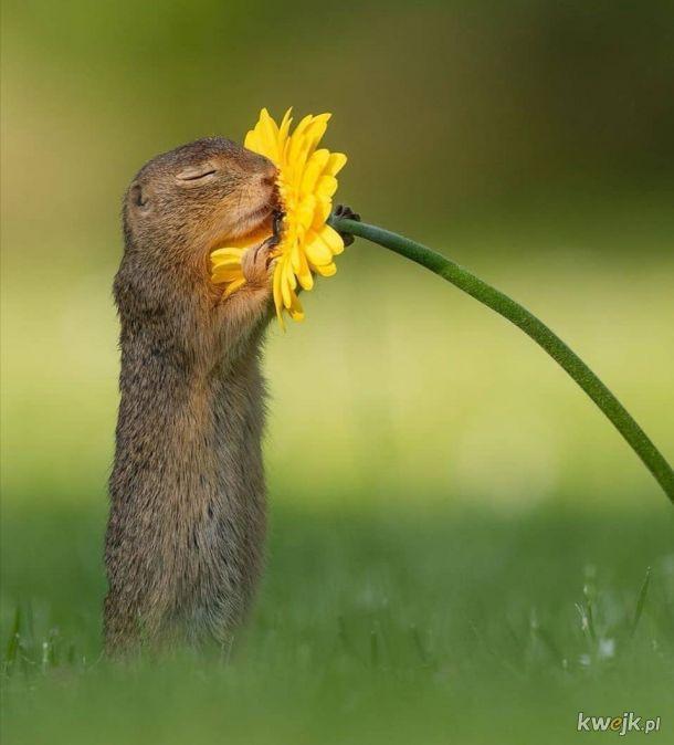 Ja i mój kwiatek na dzień kobiet