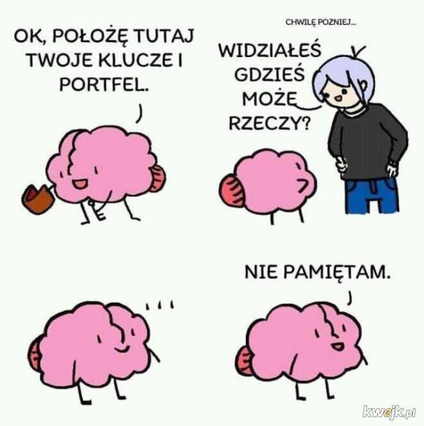 Mózg taki jest