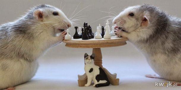 Carlsen vs Kasparov