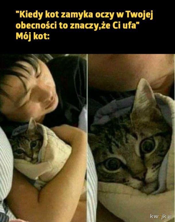 Życie z kotkiem
