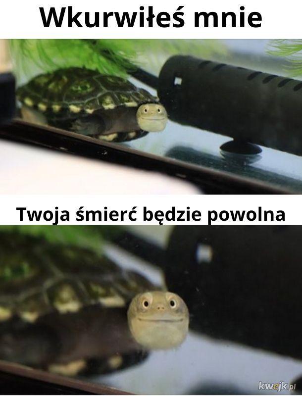 Przybij żółwika
